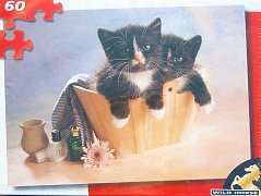 Dvě koťata