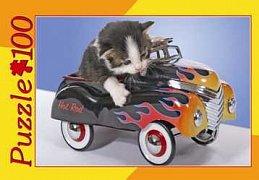 Kočičí závodník