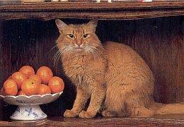 Kočka s pomeranči