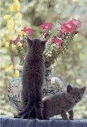 Kočky s vázou