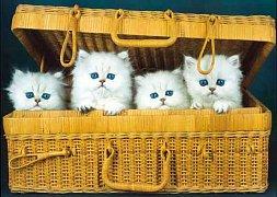 Kočky v krabici
