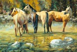Koně - přátelé