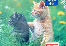 Koťátka na louce