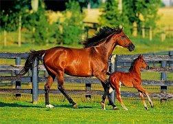 Kůň s hříbětem
