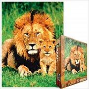 Lev a lvíče