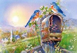 Ptáčci na schránce