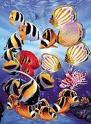 Tropické rybky