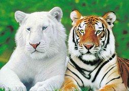 Tygří bratři