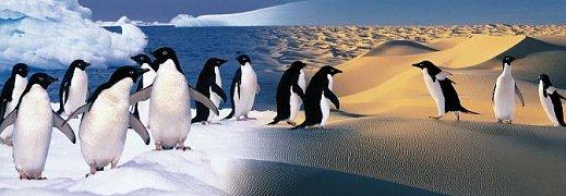Veselí tučňáci