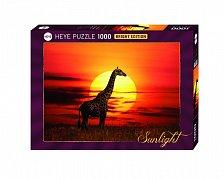 Žirafa a západ slunce