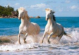 Bělouši na pláži