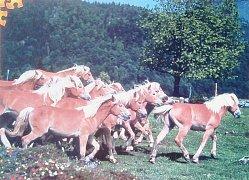 Běžící koně