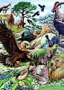 Flora a fauna