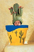 Hrnec a kaktus