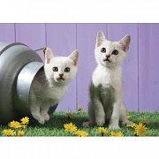 Kočičí sestry