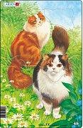 Kočky - zrzky
