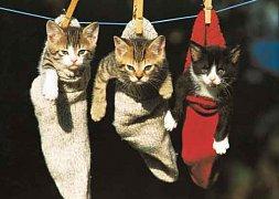 Kočky v punčochách
