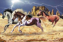 Koně v kaňonu