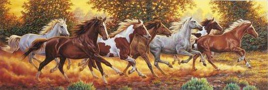 Koně ve cvalu