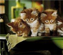 Koťátka Lena, Linus a Lulu