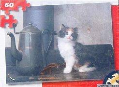 Koťátko