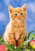 Koťátko s jablky