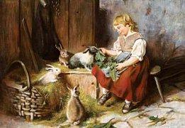 Krmení králíků