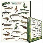 Krokodýli a aligátoři