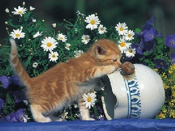 Malé kotě - 1