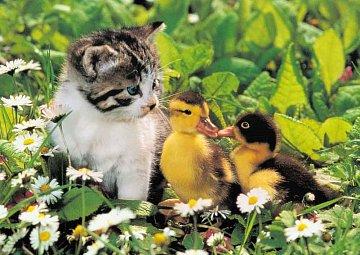 Malí přátelé - 1