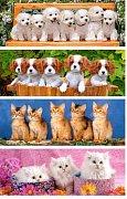 Pejsci a kočičky