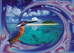 Ptáček na pláži