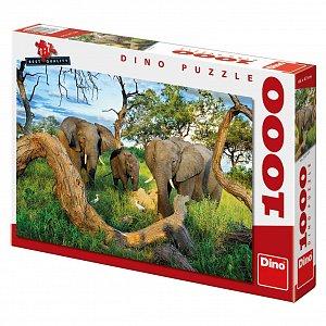 Sloni z Botswany - 1