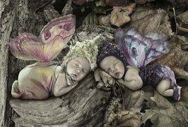 Spící motýlci