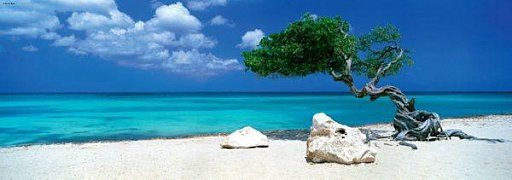 Strom Divi Divi